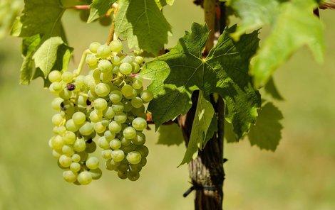 Hroznové víno rozjasní vaši pleť.