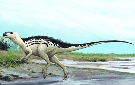 Nalezenému dinosaurovi bylo podle všeho 15 let.