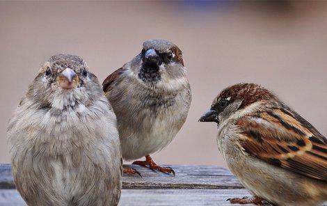 Sex velkého ptáka