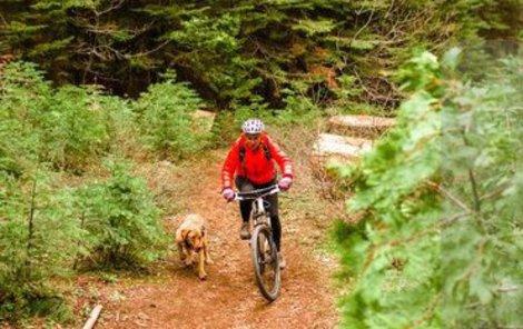 Kontakt mezi cyklistou a psem může být bolestivý.