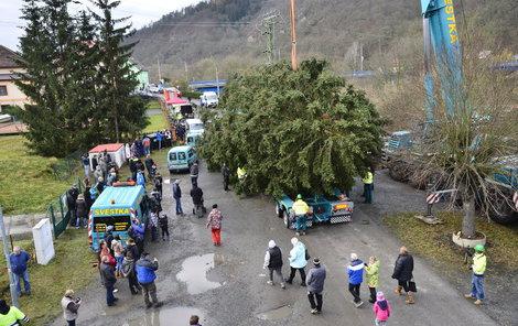 Strom si převzali odborníci přepravní společnosti, kteří ho upevnili do horizontální polohy.