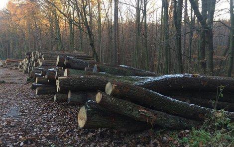 Zaměřili se na soukromé lesy převážně na Vysočině.