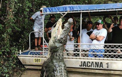 Obrovský krokodýl z vody vyskočil do výše střechy loďky.