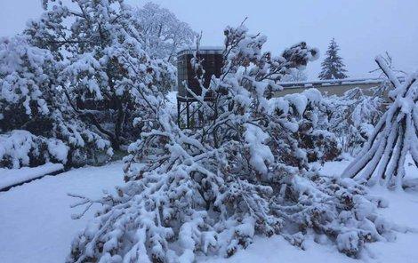 Mokrý sníh může lámat větve stromů a keřů.
