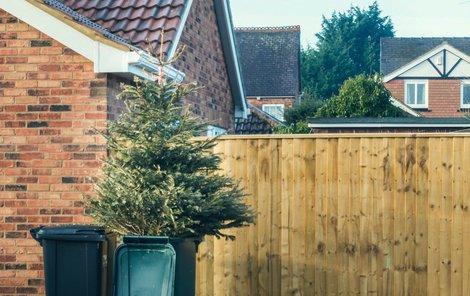 Vánoční svátky už pominuly a stromečkům odzvonilo. Jak se pichláče zbavit co nejsnadněji?
