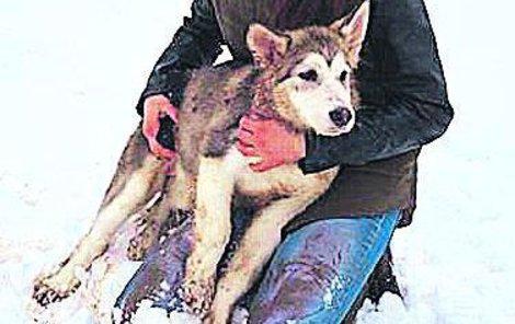 Strážníci museli tento otvor zvětšit, aby do něj mohli vložit žebřík a štěně aljašského malamuta vytáhnout.
