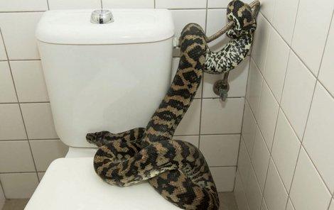 Záchod obsadila krajta.