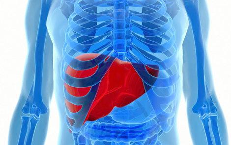 Játra jsou největším orgánem v břiše a váží kolem kilogramu a půl.