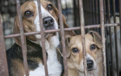 Pes je v Koreji vyhledávanou lahůdkou.