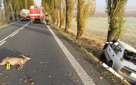 Nehody se zvěří nebývají smrtelné, pokud ale řidič nabourá do stromu, je pětkrát pravděpodobnější, že zemře.