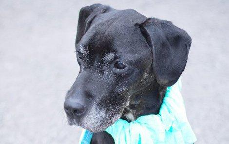 Luboš je velmi přátelský psí senior.