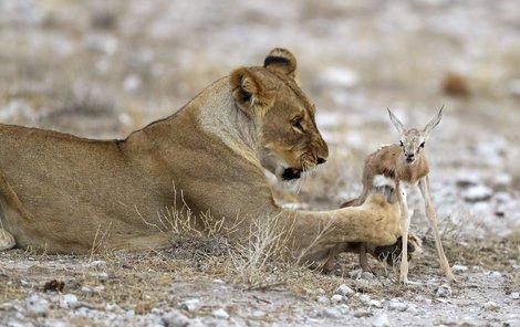 Neboj, maličká...Sežeru tě leda láskou!