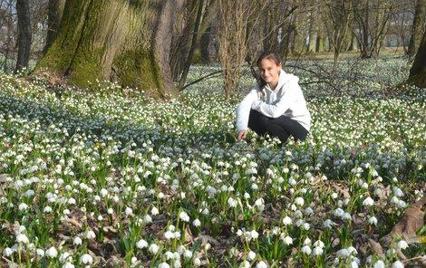 Bílá krása láká k utržení. Bledule ale patří podle zákona mezi zvláště chráněné druhy rostlin.