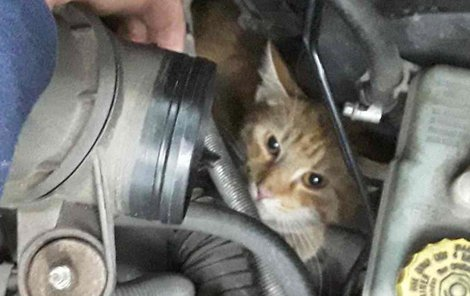 Nebohá kočka zůstala zaklíněná v motoru auta.