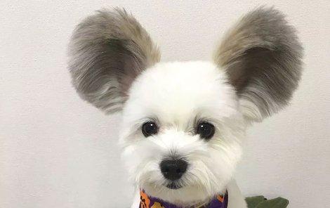Pejsek, nebo Mickey Mouse?