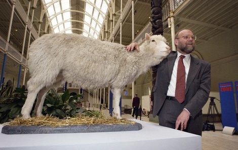 Wilmut s vycpanou ovcí Dolly, kterou vystavují v královském muzeu v Edinburghu.