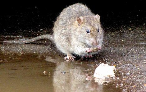 Krysy zbořily činžák.