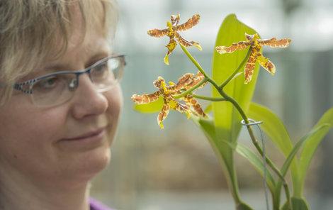 Nepřehlédnutelně kvete medovou barvou kombinovanou s jasně žlutou.