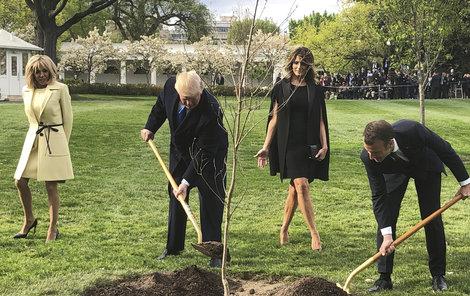 Takto dub při návštěvě společně sázeli. Zbylo po něm jen nažloutlé místečko.