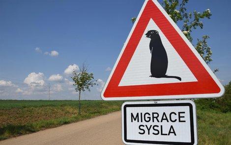 Značka upozorňující na výskyt syslů je povolená.
