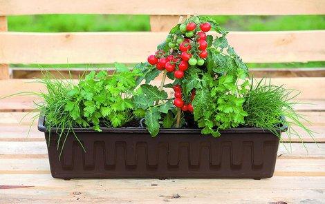 Truhlík se zeleninou a bylinkami