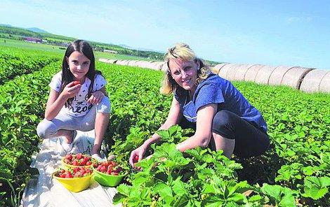 """Monika Brousková s dcerou Petrou si přišly nasbírat na jídlo a jahodové knedlíky """"Jsou sladké a velké. Rychle se sbírají,"""" pochvalovala si žena"""