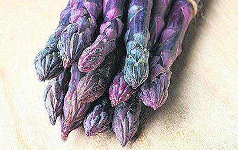 Nový fialový chřest má hodně antioxidačních účinků.