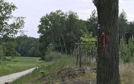 Kdo posprejoval stromy v lese?
