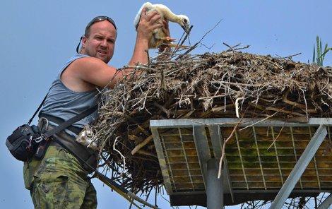 Zvířecí záchranář Karel Makoň u hnízda na komíně.