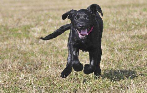 Toto štěně jménem Marley ubožák Jakub L. týral...