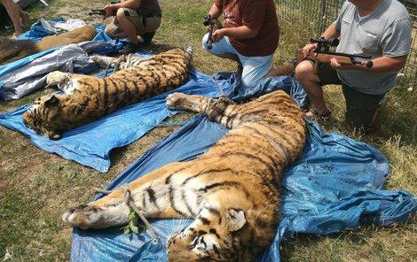 Zvířata po uspání.