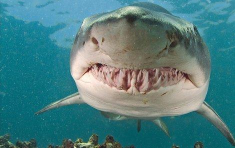 Žralok tygří není co se potravy týká náročný. V dospělosti napadá i velryby – keporkaky či plejtváky obrovské.