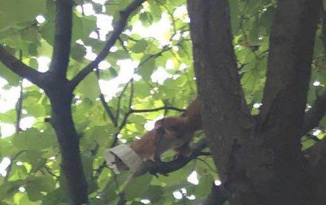 Plast nechce veverku pustit ze svého sevření.