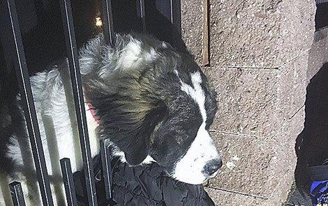 26. listopadu 2018 Affi v panice prostrčila hlavu skrz mříže brány, a už to nešlo tam ani zpět.