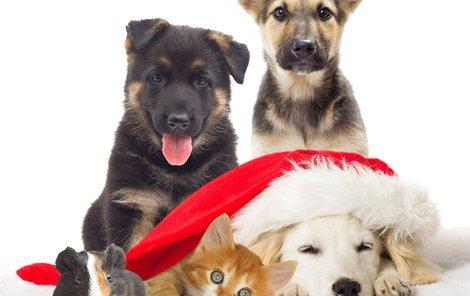 Zvíře jako vánoční dárek? Dobře si rozmyslete, zda jste schopni se o něj postarat i po svátcích.