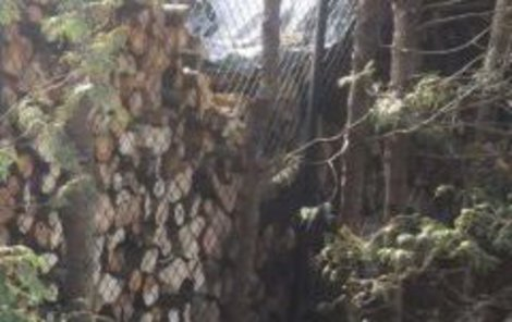 Hromada dříví za plotem u souseda nedá spát ženě z olomoucké čtvrti Chomoutov.