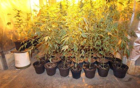 Dva a půl roku pěstovala doma ve sklepě marihuanu žena (49) se synem (29) z Hradce Králové.