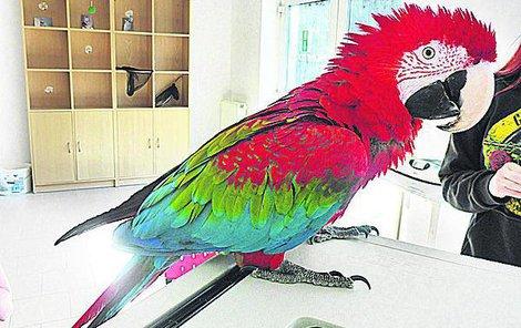 Papoušek Dorotka