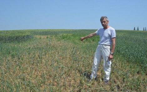 """""""Velké plochy ozimé pšenice jsou zlikvidovány,"""" ukazuje zemědělec Josef Sedláček."""