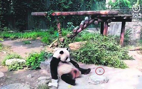 Vedení zoo slíbilo, že celý incident prošetří.