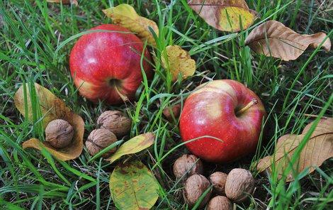 Jablka a ořechy