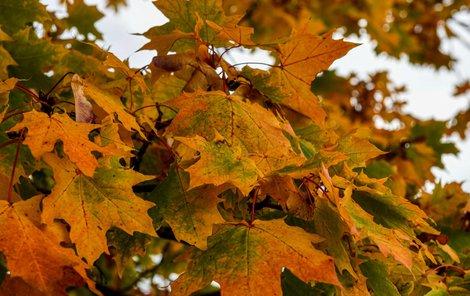 Podzim v Česku