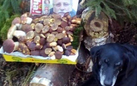 Lumpík se svým páníčkem Jiřím našli ve čtvrtek plný košík hříbků a babek...