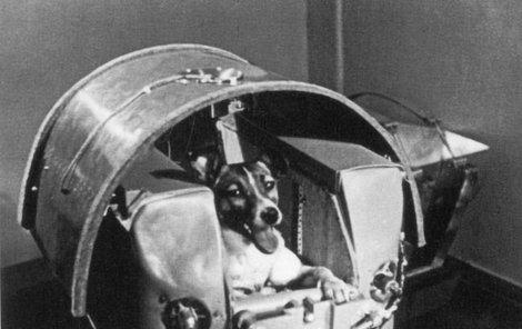 Ještě před startem do vesmíru Lajka zapózovala fotografům. O pár hodin později se jí zastavilo srdce.