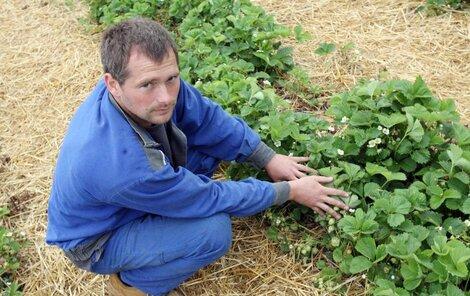 Milan Hamala je přeborníkem v pěstování jahod.