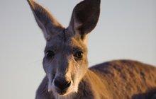 Matka se vykašlala na šest dětí: Řekla, že jde nakoupit a utekla do Austrálie!