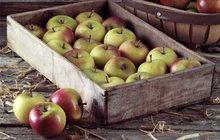 Co s přebytečnými jablky? 4 super recepty!