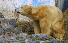 Cora po porodu: Medvědí dvojčata už kojí!
