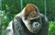 Gorily ze Zlína se milovaly až za hrob! Po Juditě (†49) uhynul steskem i její partner Bosso (†41)