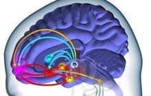 10 faktů o mozku: Je rychlejší než Porsche 911!